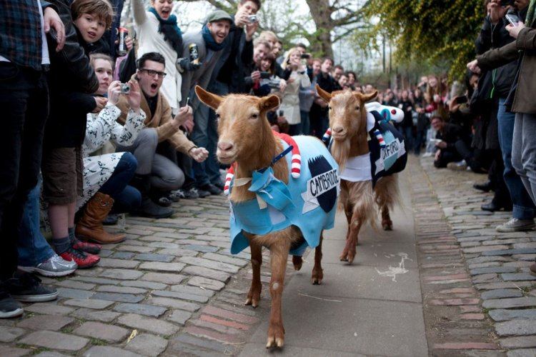 goat race London pindrop