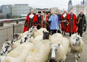 sheepdrive2